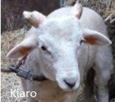 Kiaro