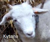Kytana
